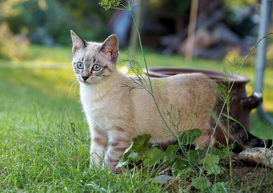 kočka na zahradě